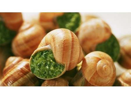Escargots de Bourgogne très gros Feyel